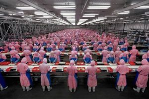 chinese chicken factory