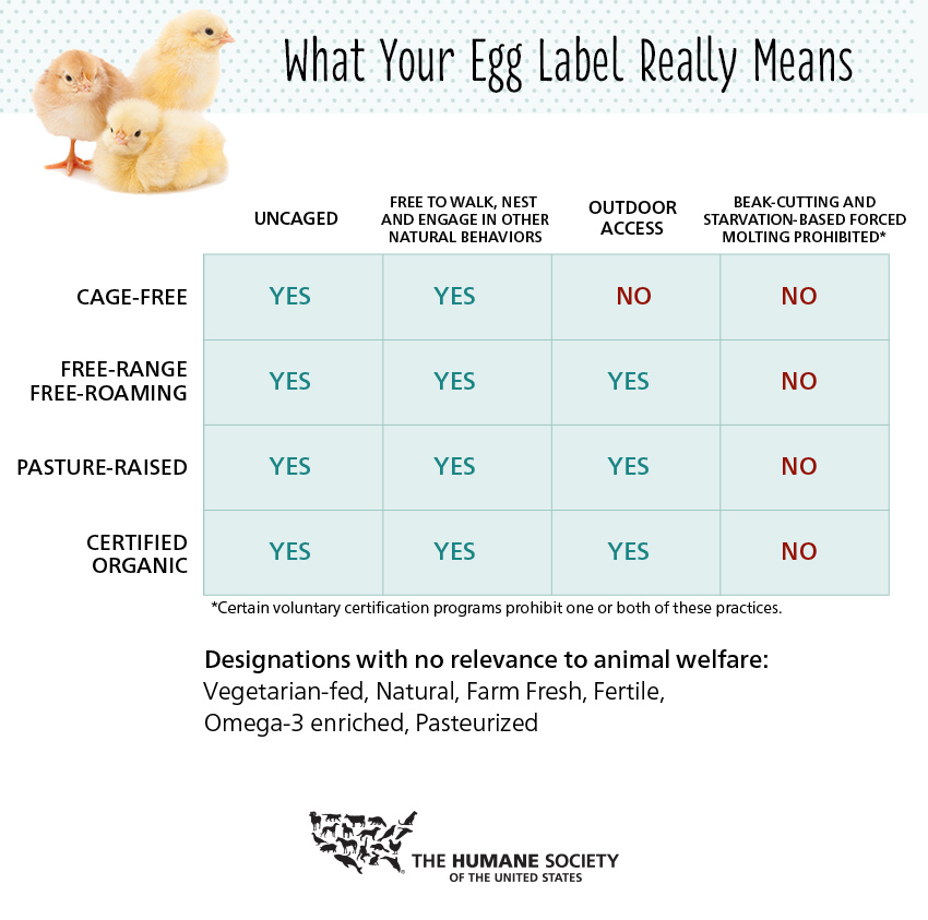 how-to-read-egg-label-full